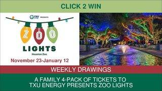 CLICK2WIN: Zoo Lights Family 4-Pack