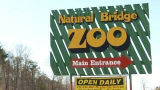 Natural Bridge Zoo responds to concerns about elephant
