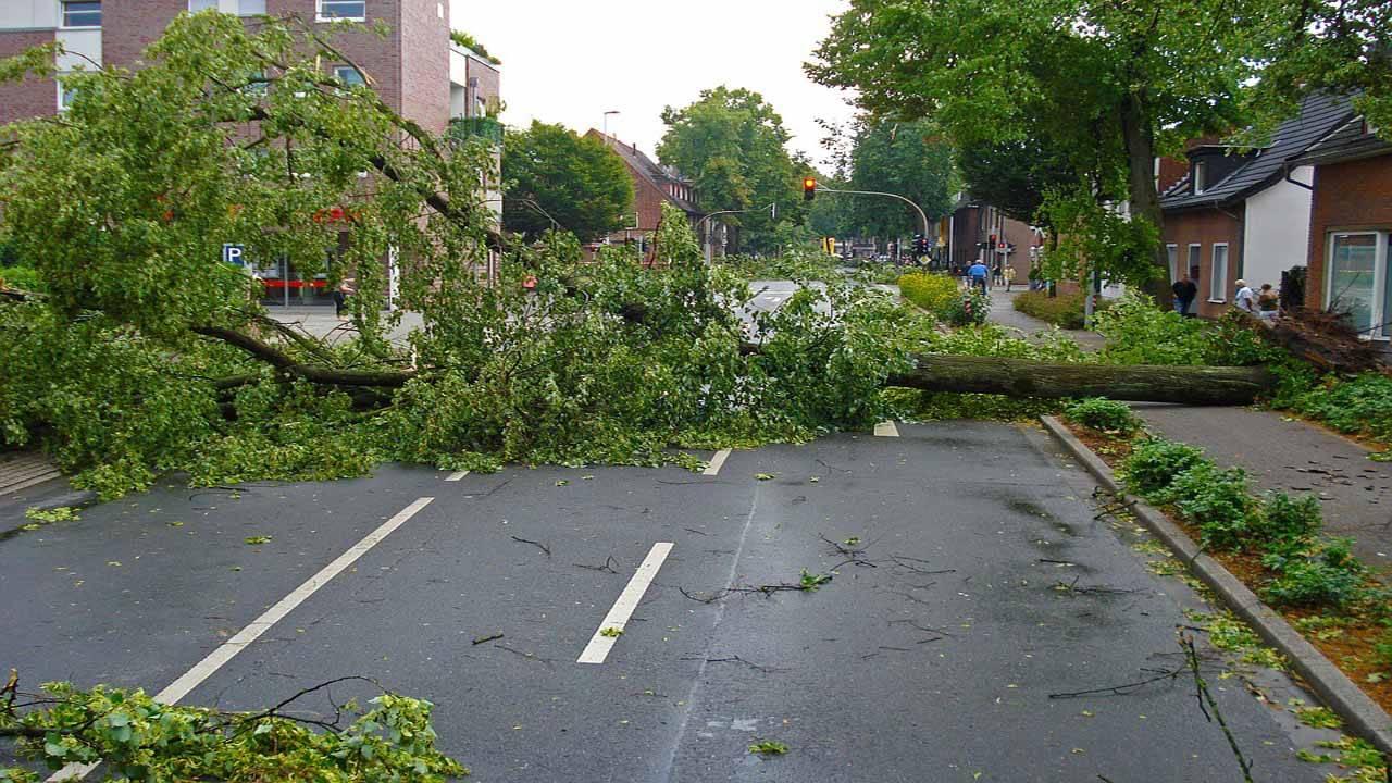 debris storm damage down tree_1557425699654.jpg.jpg