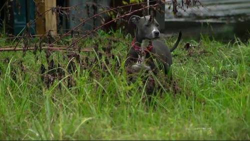 Man suffers mild heart attack during encounter with 4 loose dogs at SE Houston park