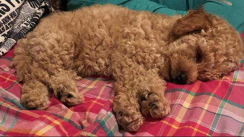 Dog theft caught on home surveillance video