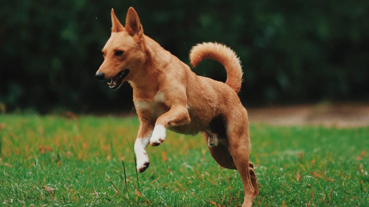 dog-classes-2-061719.jpg