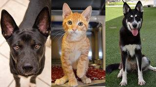 Animal shelter doing $1 pet adoptions through end of October