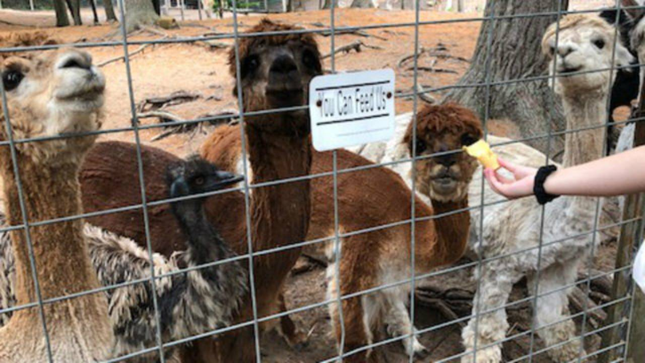 Zoo 3_1532727918440.jpg.jpg