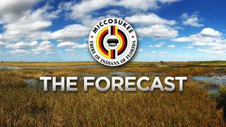 Local 10 Forecast August 17 Evening