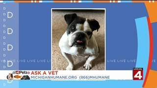 The vet is here to answer your pet questions!