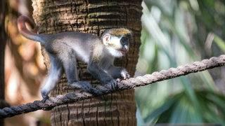 Meet the Houston Zoo's new baby monkey