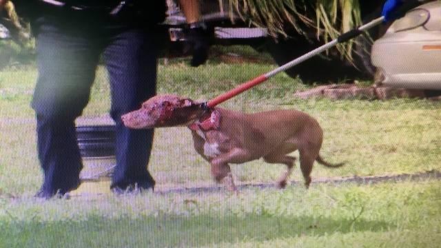 Dog shot in Miramar
