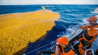 Florida coast hit by 'stinky' seaweed invasion