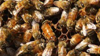 Virginia launches program to increase number of bee colonies