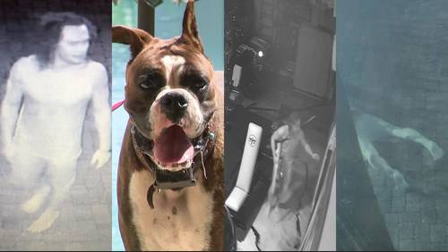 Barefoot bandit chased by dog, Hank Williams, before stealing 4 guns from Kingwood home