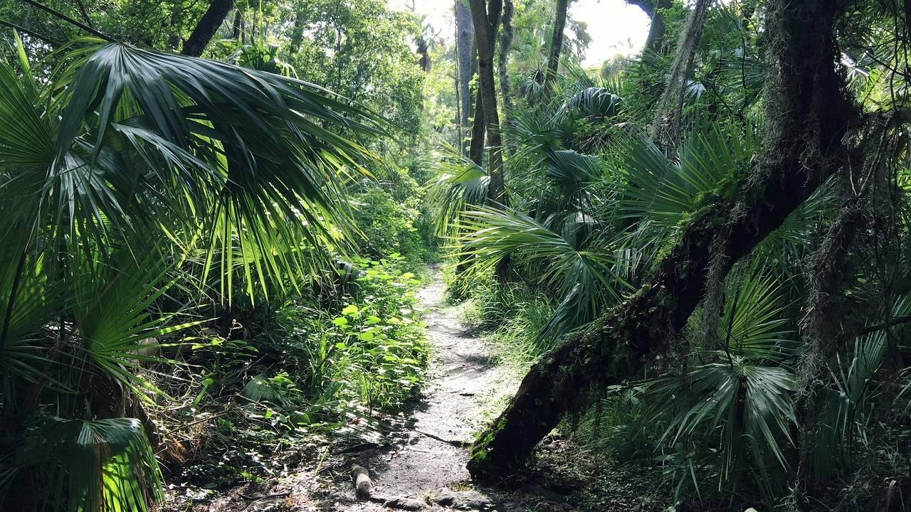 semco trail_1538063114902.JPG.jpg