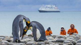 Antarctic penguins in danger from human diseases, researchers say