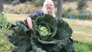 Holy cabbage! Australian couple grow giant vegetable