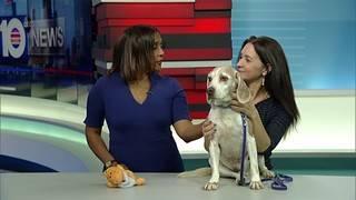 Adopt a pet: Meet Karma
