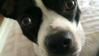 Is your dog cutest? This contest wants to give your rescued fur baby…