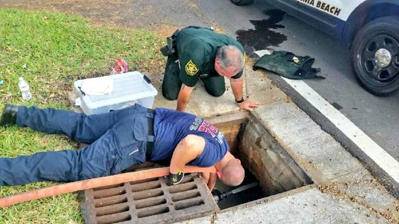 BSO rescuing ducklings