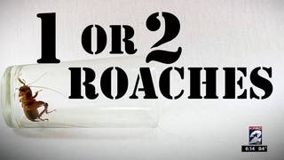 Restaurant Report Card: Roaches and rodents, oh my!