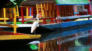 Images: Colorful gondolas, historic canals of Xochimilco in Mexico City