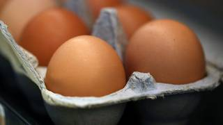Rodents and filth cited in FDA report on farm linked to egg recall