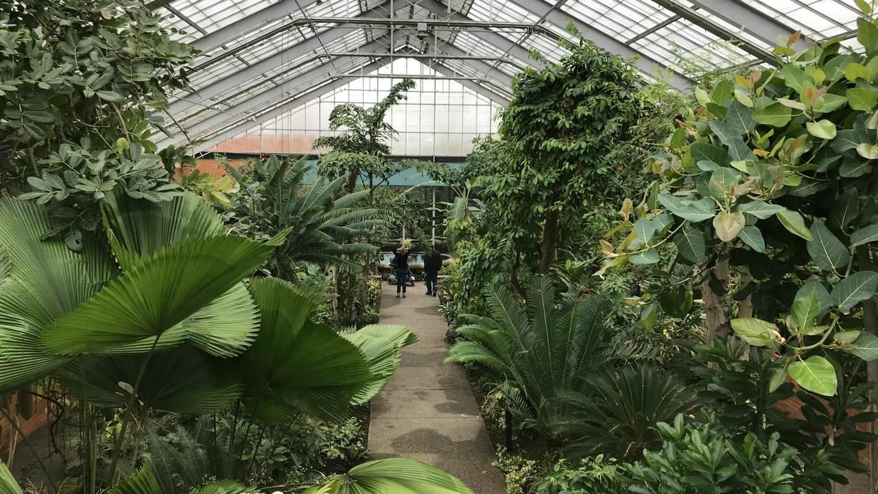 Matthaei Botanical Gardens view