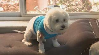 Coral Springs woman wants dog out of neighborhood after it attacked her pet