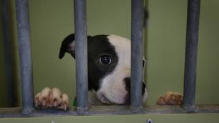California limits pet store sales of cats, dogs and rabbits to