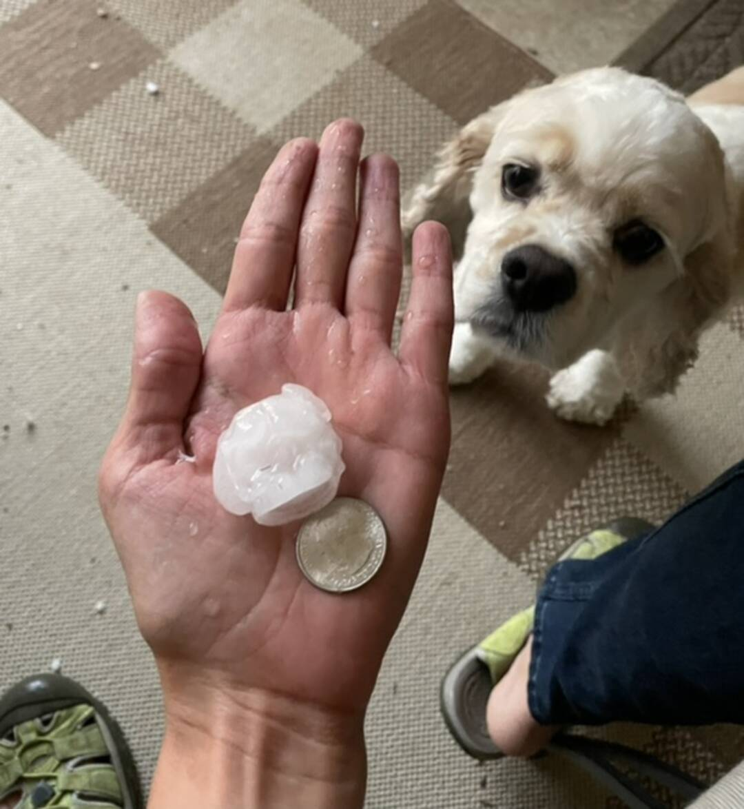 Mr. Caskey,  I took this at around 7:10 pm. The storm brought some nice size hail and as you can see I included both a quarter and a cocker spaniel for size reference.  I teach Prek at SWISD and the kids love to talk about the weather! Every day we sing, How's the weather out today?! You can bet we will discuss this tomorrow.  Ms. Smith