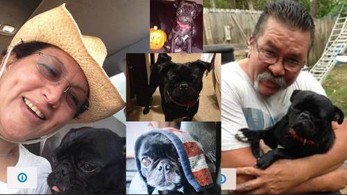 Canine custody battle: Woman fears she will never see her pug, Lily, again