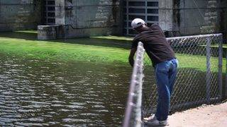 Tell us your experiences with red tide and blue-green algae