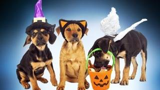 Halloween can be a scary time for pets. Keep them safe with these tips