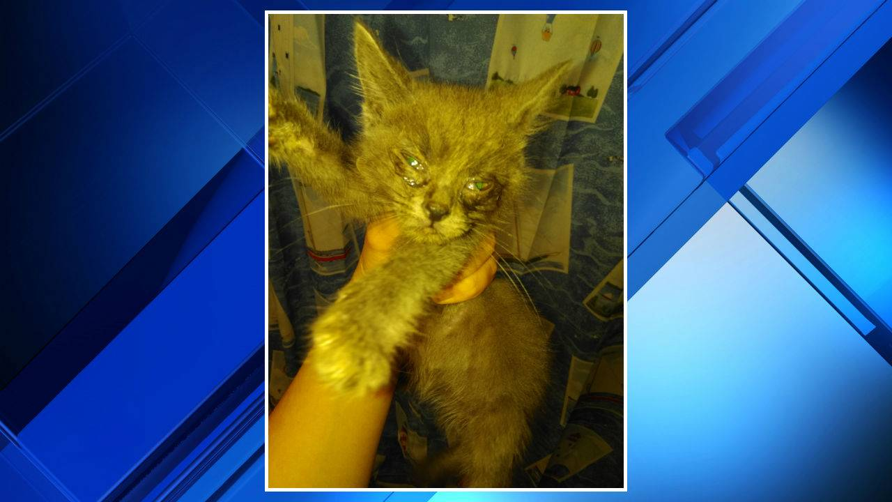 Cats rescued from Southwest Detroit home 2