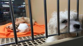 Brevard Approves Restrictions On Pet Store Sales Of Dogs Cats