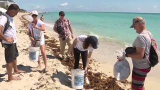 Pick up your plastic: Plastic on South Florida's beaches is ruining ecosystem