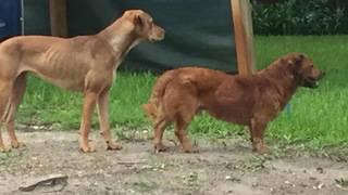 Dog attacks concern San Marco, Lakewood residents