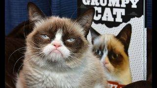 Other celebrity pets might have it harder than Grumpy Cat