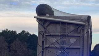 Bear spotted hanging from moving garbage truck on highway