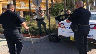 Homeless man carrying massive snake rattles Florida beach town