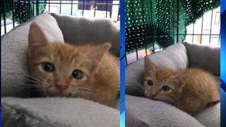 Kittens thrown from moving vehicle in New Smyrna Beach
