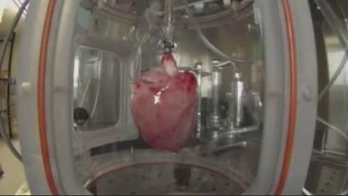 Doctor, team build transplantable hearts