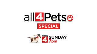 'All 4 Pets' Special – Sunday at 7 p.m. for pet lovers in Metro Detroit