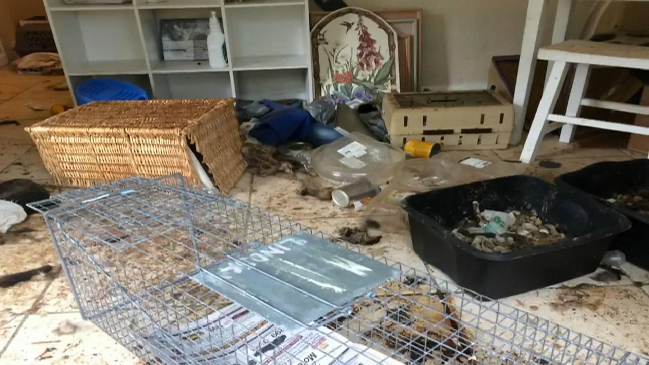 Efficiency where cats found dead in north miami beach