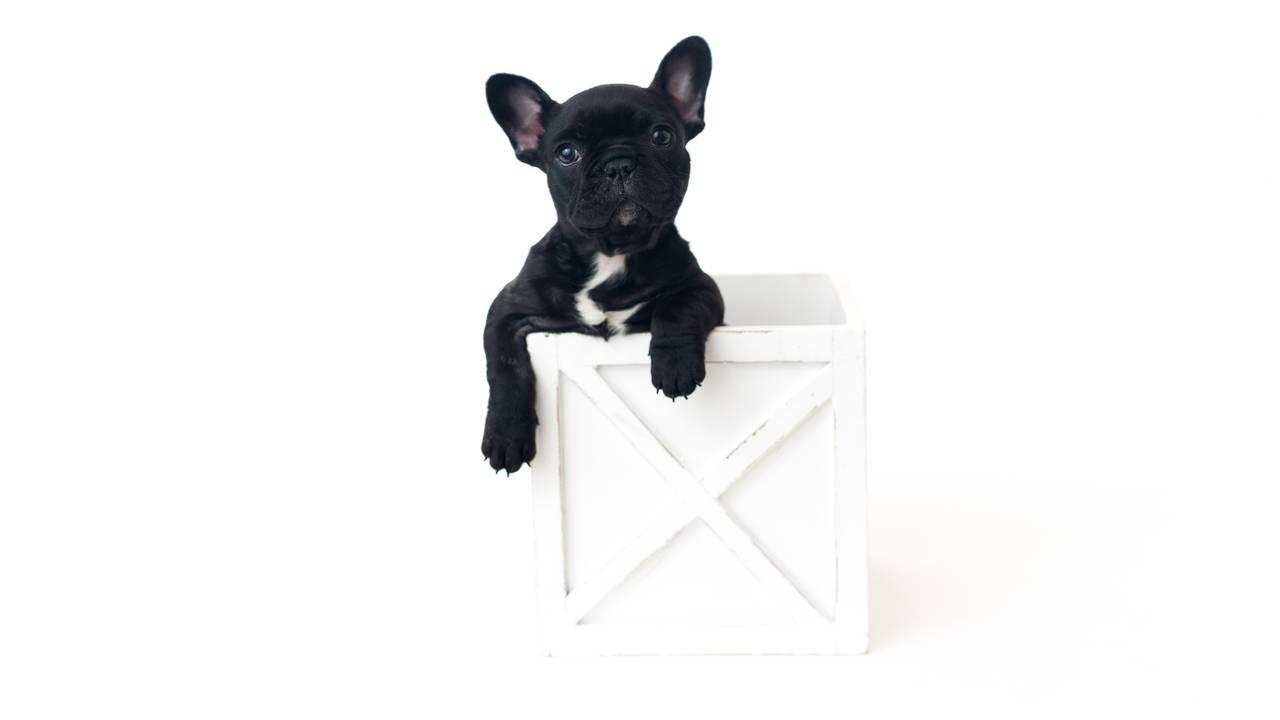 Olive Puppy Newborn-Olive Puppy Newborn-0004.jpg