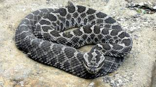 World Snake Day: These 18 species of snakes are found in