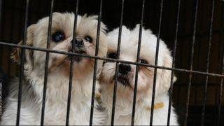 Pet sale regulations to combat puppy mills go back for rewrite