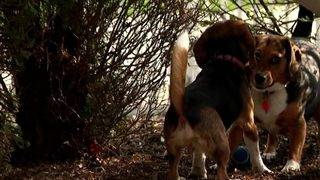 All 4 Pets: Tips to prevent fleas and ticks
