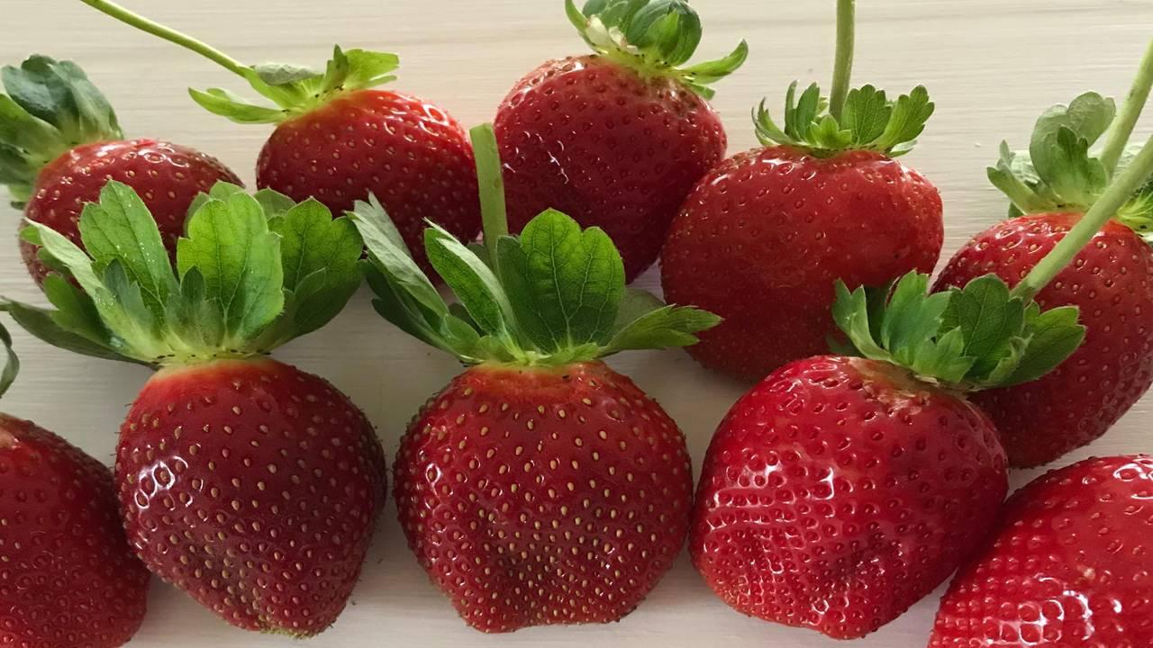 Lavoie strawberry_1548096233894.jpg.jpg