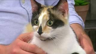 Pet of the Week: Meet Bella from the RVSPCA