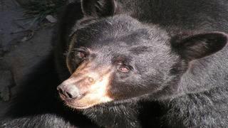 Bill seeks to protect mama bears
