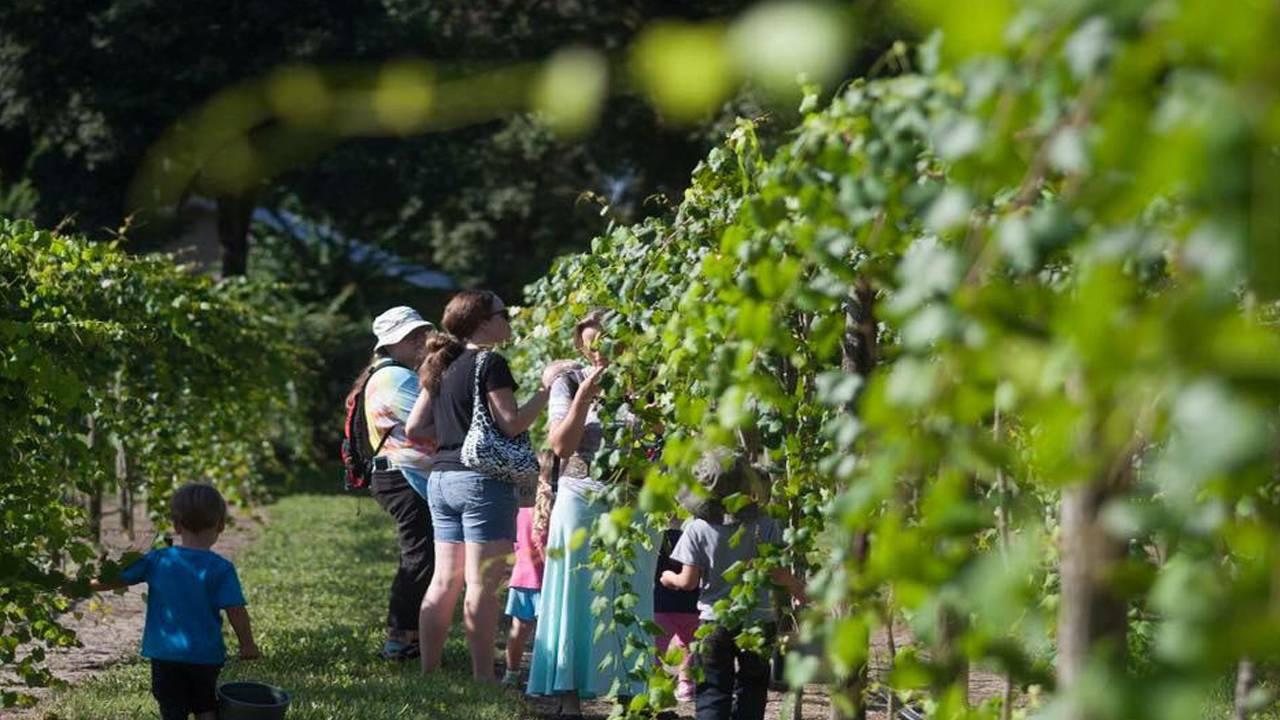 spring garden vineyard2_1548096231311.jpg.jpg